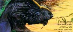 """Livre """"Sur la piste du castor"""""""